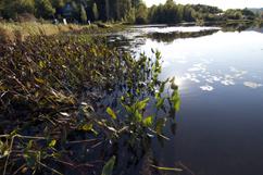 Lac_Bromont